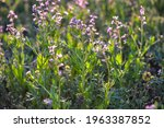 purple spring flowers on the... | Shutterstock . vector #1963387852