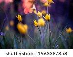 flowers at sunset. soft focus. | Shutterstock . vector #1963387858