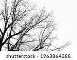 Bare Tree Branches Silhouette...