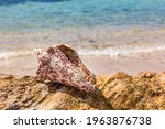 Sea Shell On A Rock With The...