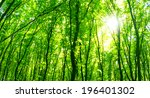 forest trees. | Shutterstock . vector #196401302