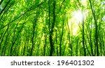 forest trees. | Shutterstock . vector #196401302