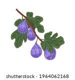 tree branch with ripe purple...   Shutterstock .eps vector #1964062168