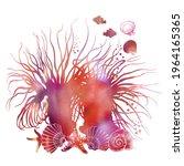 Colorful Sea Anemones  Shells ...