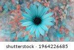 Blue Osteospermum Against Blue...