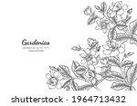 gardenias flower and leaf hand... | Shutterstock .eps vector #1964713432