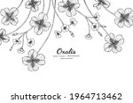 oxalis flower and leaf hand... | Shutterstock .eps vector #1964713462