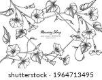 morning glory flower and leaf... | Shutterstock .eps vector #1964713495