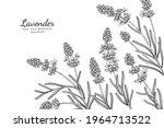 lavender flower and leaf hand... | Shutterstock .eps vector #1964713522
