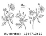 roses flower and leaf hand...   Shutterstock .eps vector #1964713612
