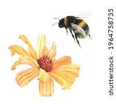 garden flower heliopsis and... | Shutterstock . vector #1964758735
