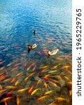 A Vertical Shot Of Ducks...