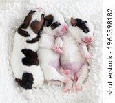 Newborn Puppy Sleeping. Small...