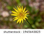 Wild Plant  Scientific Name ...