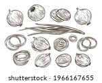onion bulb and rings sketch.... | Shutterstock .eps vector #1966167655
