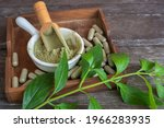Andrographis Extract Powder In...