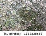 A Closeup Shot Of A Huge Rock...
