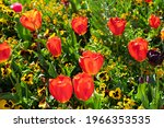 Spring Flowerbed With Red ...