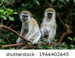 animal monky puteful so mouch
