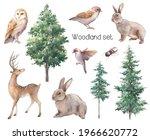 Woodland Illustration Set....