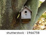 Birdhouse In Mossy Tree With...