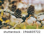 spring, a bumps on a branch. High quality photo