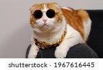 A Close Up Cat Wearing...
