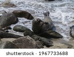 A Sea Lion Perched On A Rock At ...