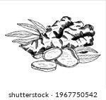 ginger plant arrangement....   Shutterstock .eps vector #1967750542