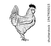 Hand Drawn Graphic Rooster In A ...