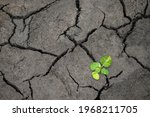 Young Plants Are Rebirth And...
