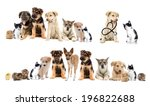 Stock photo set pets 196822688
