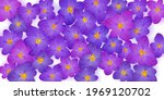 crocus spring flowers vector... | Shutterstock .eps vector #1969120702