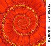 A Gerbera Daisy S Red Petals...