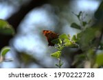 High Contrast Centered Photo Of ...