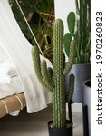 Large Green Cactus In The...
