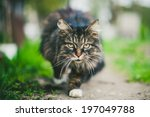 Cat With Long Hair On Natural...