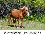 Beautiful Wild Horse At...