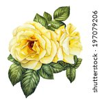 yellow rose flower watercolor | Shutterstock . vector #197079206