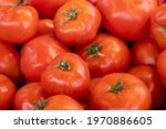 Fresh Red Tomatoes In The...
