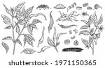 hand drawn icons or symbols of...   Shutterstock .eps vector #1971150365