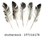 feather of a bird on a white... | Shutterstock . vector #197116178