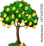 yellow mango tree isolated on... | Shutterstock .eps vector #1971427355