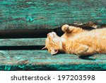 Stock photo red kitten cat sleeps on a bench in park in hot summer day 197203598