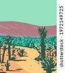 cholla cactus garden nature...   Shutterstock .eps vector #1972149725