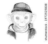 hand drawn portrait of monkey... | Shutterstock .eps vector #1972525838