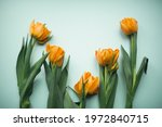 Tulips On A Turquoise...