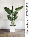 room decoration with a plant | Shutterstock . vector #1973021495