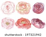 set of roses and peonies... | Shutterstock . vector #197321942