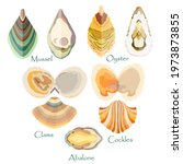 set with edible mollusks made...   Shutterstock .eps vector #1973873855